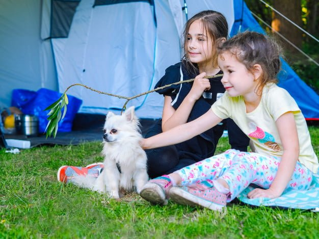 Tips to enjoy camping with your dog